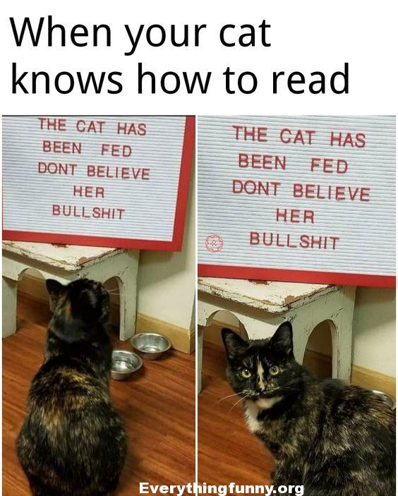 funny cat picture, funny cat caption funny when your cat knows how to read funny cat sign the cat has been fed don't believe her bull and cat looks back at person mad