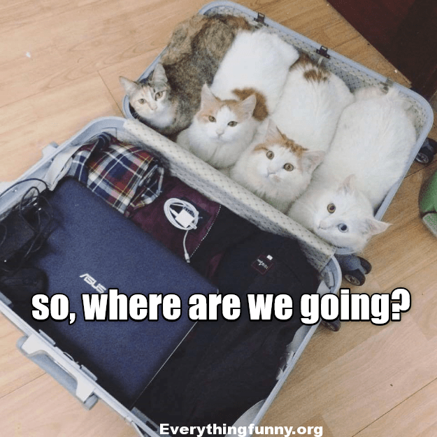 funny cat caption pic 4 cats all pile into a suitcase so owner can't leave