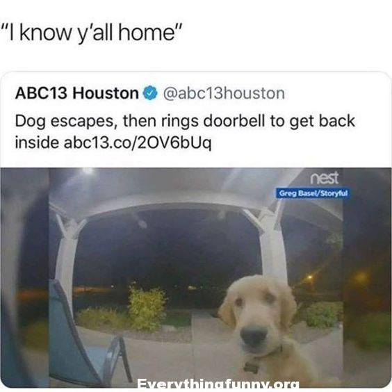 funny dog post, funny dog caption, dog escapes then rings bell to get back inside