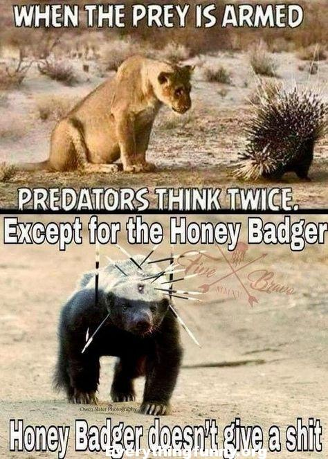 funny caption picture funny animals when the prey is armed predators think twice except for the honey badger honey badger doesn't give a