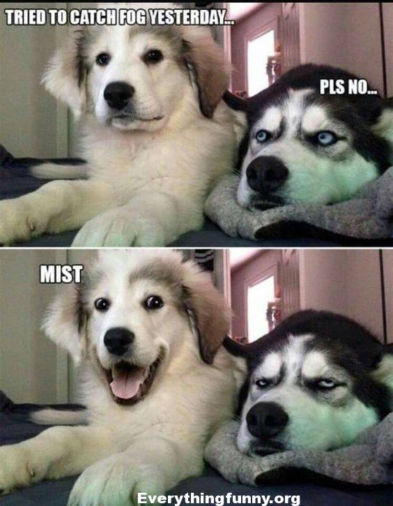 funny 2 dog one liner meme, funny dad joke, funny pun, tried to catch fog yesterday pls no mist