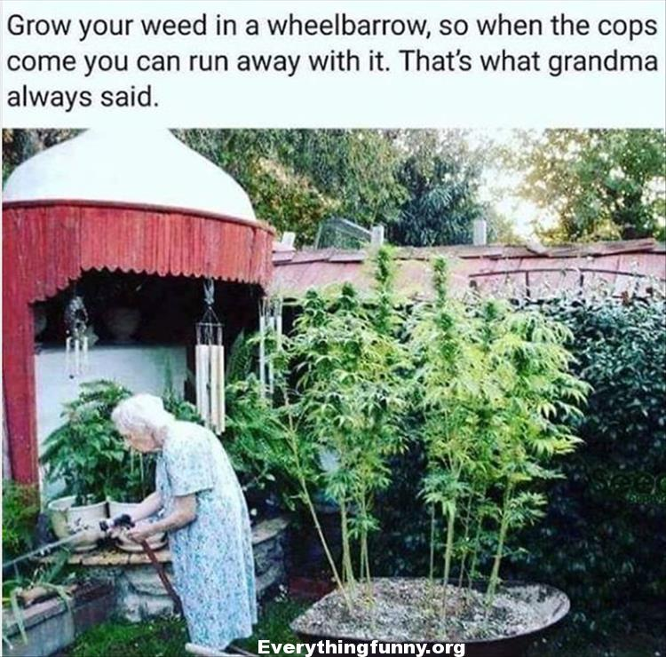 funny meme funny caption grow your weed in a wheelbarrow so when the cops come you can run away with it that's what grandma always said