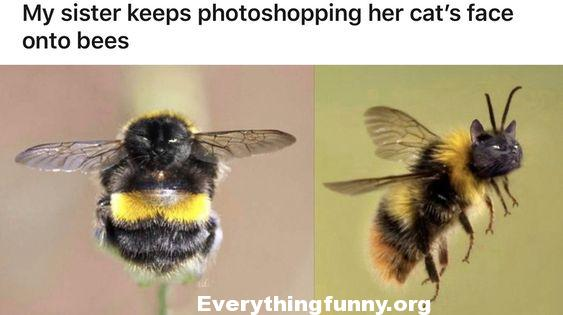 funny photoshop pics, funny filters on photos, my sister keeps photoshopping her cat's face onto bees