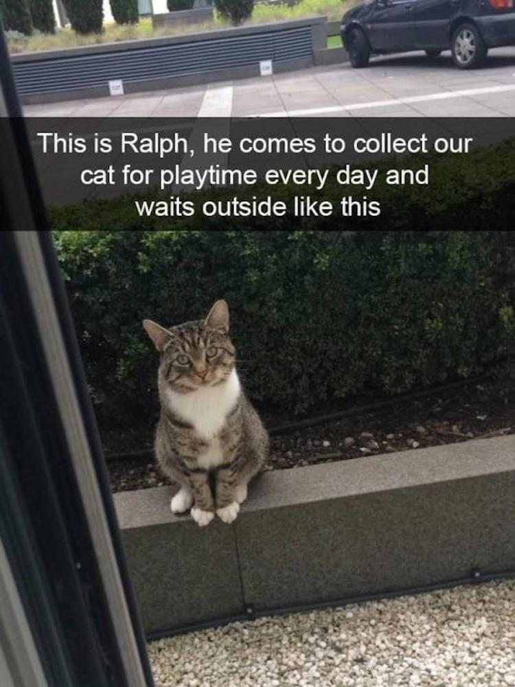 funny meme funny cat picture funny cat mem visiting cat ralph comes to collect our cat for playtime everyday and waits outside like this