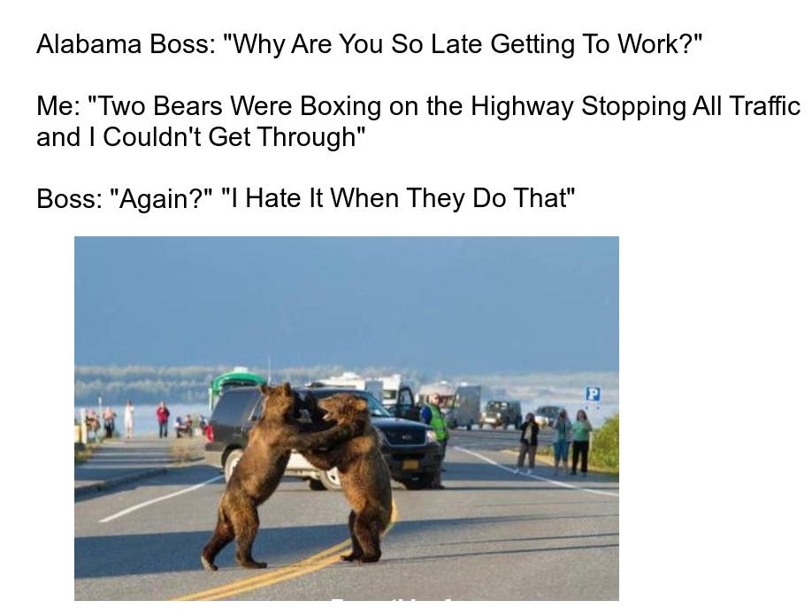 Funny post funny status why are you late to work? two bears were boxing on the highway and i couldn't get it through again i hate it when they do that