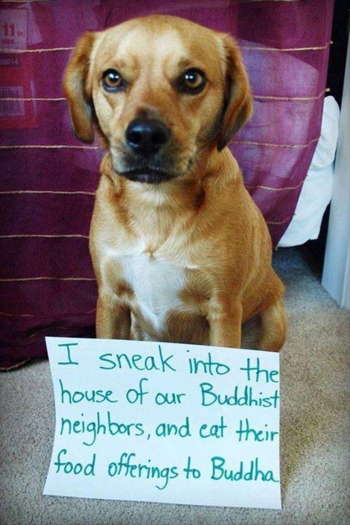 funny dog shaming i sneak into the house of our Buddhist neighbors and eat their food offerings to Buddha