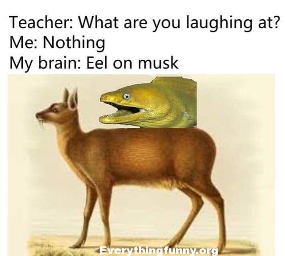 funny post status cartoon what are you laughing at me nothing my brain eel on musk