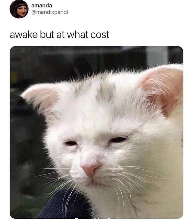 funny post, funny status, funny cat  meme, awake but at what cost