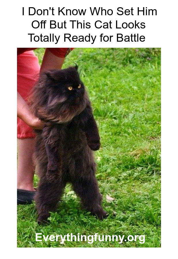funny memes, funny cat meme, cat standing on hind legs ready for battle