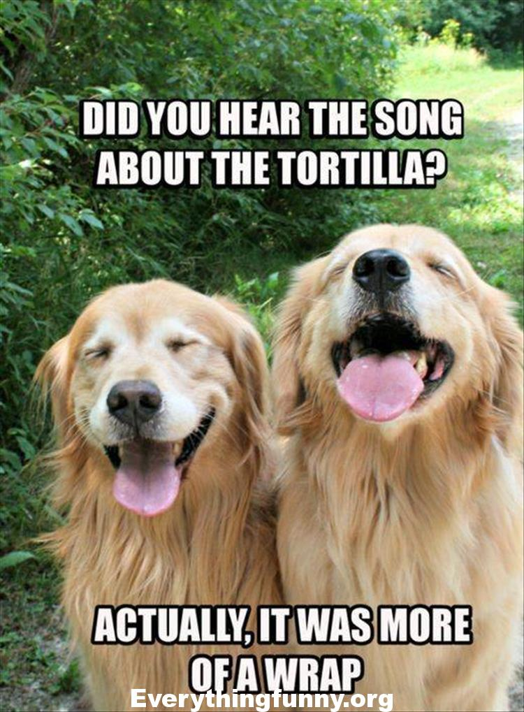funny pun memes, funny dad joke memes, corny jokes, corny puns, funny two dog did you hear the song about the tortilla actually it was more of a wrap
