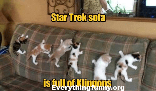 funny cat caption pictures star trek sofa is full of klingons