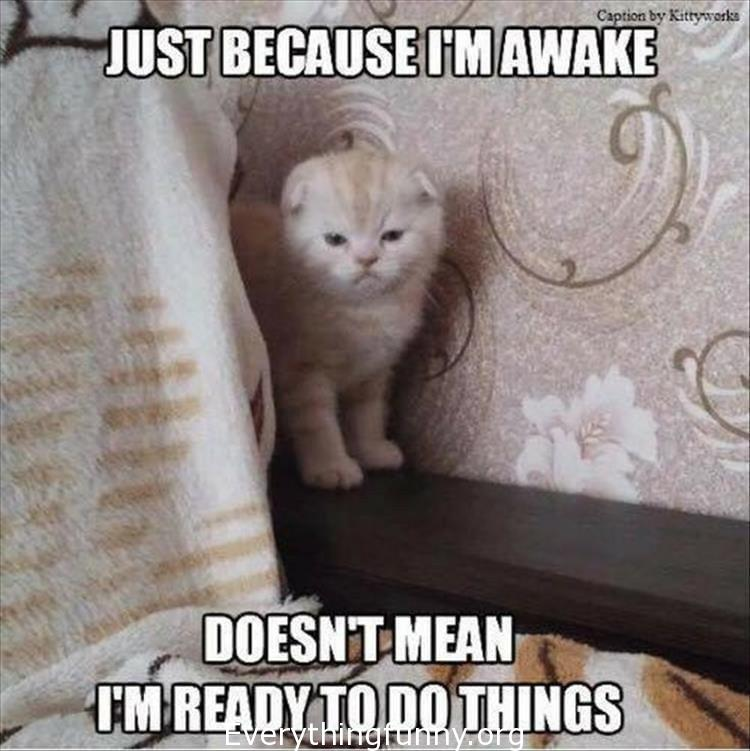 funny cat memes,  funny cat captions, funny cat pictures with captions just because i'm awake doesn't mean i'm ready to do things