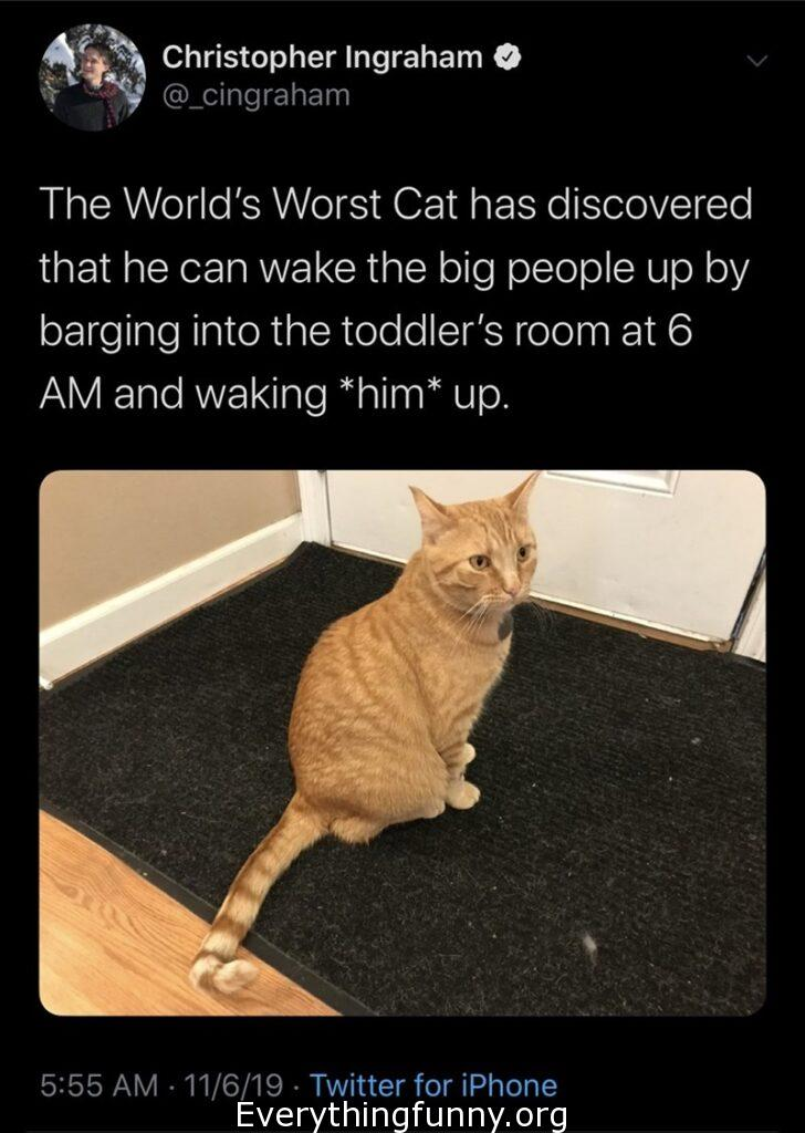 funny tweet, funny twitter, funny cats, funny cat memes, funny cat stories, funny cat posts,
